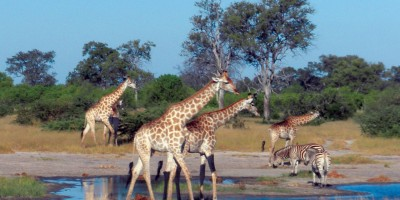 שייט אקזוטי באפריקה