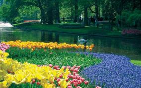 הולנד ובלגיה בפריחת הצבעונים