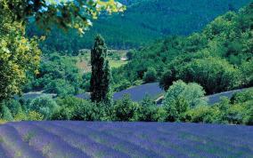 פניני דרום צרפת