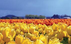 אביב בהולנד ובלגיה